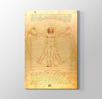 The Vitruvian Man 1498
