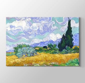 Oat Field with Cypress
