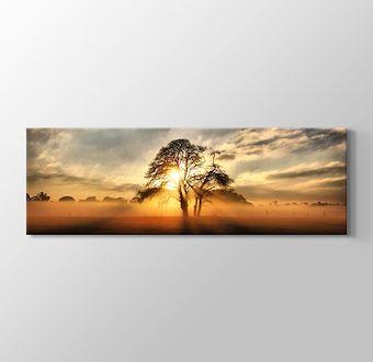 Gün Işığı Ağacı