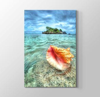 Issız Adadaki Deniz Kabuğu