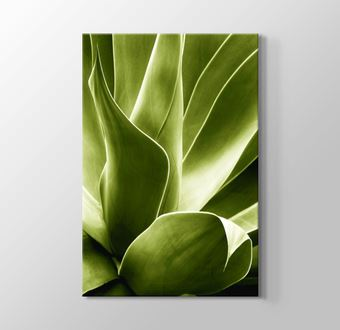 Flora IV