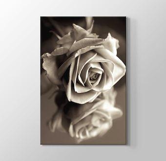 Sephia Flower Close-Up