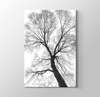 Ağaç Perspektif