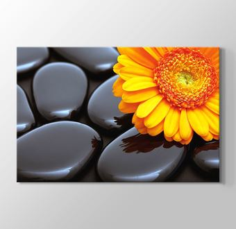 Black Pebbles and Flower