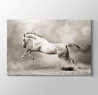 Gümüş Rengi At