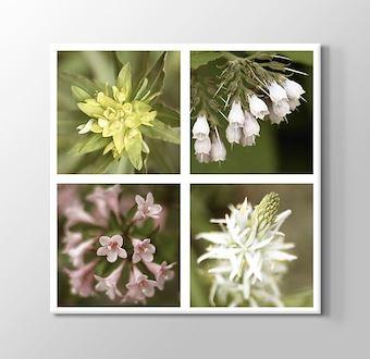 Quattro Flowers
