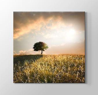 Loner Tree