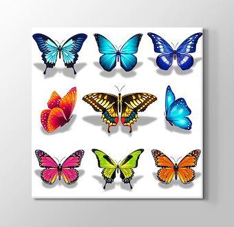 Excellent Butterflies