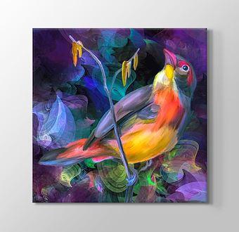 Tropikal İklim Kuşları I