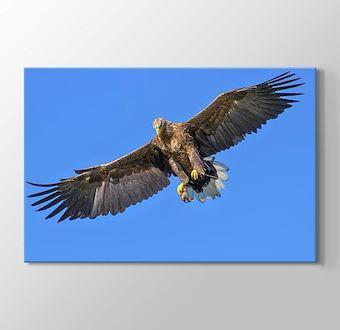 Yırtıcı Kuş Kartal
