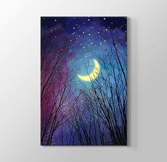 Ormanda Yıldızları ve Ayı İzlemek